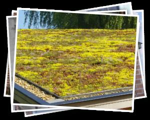 Constructieberekening groen dak